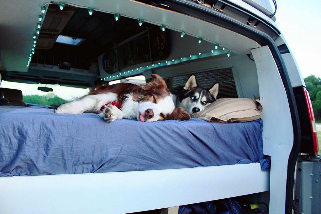 Zwei Hunde schlafen im Camper