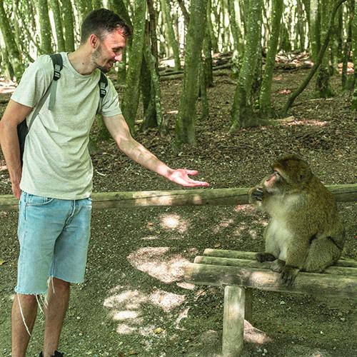 Affenpark, Mann streckt Hand zum Affen aus