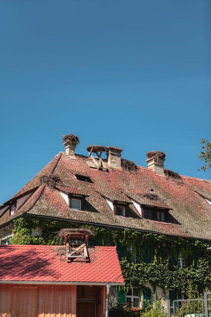 Bodensee mit Efeu bewachsenes Haus