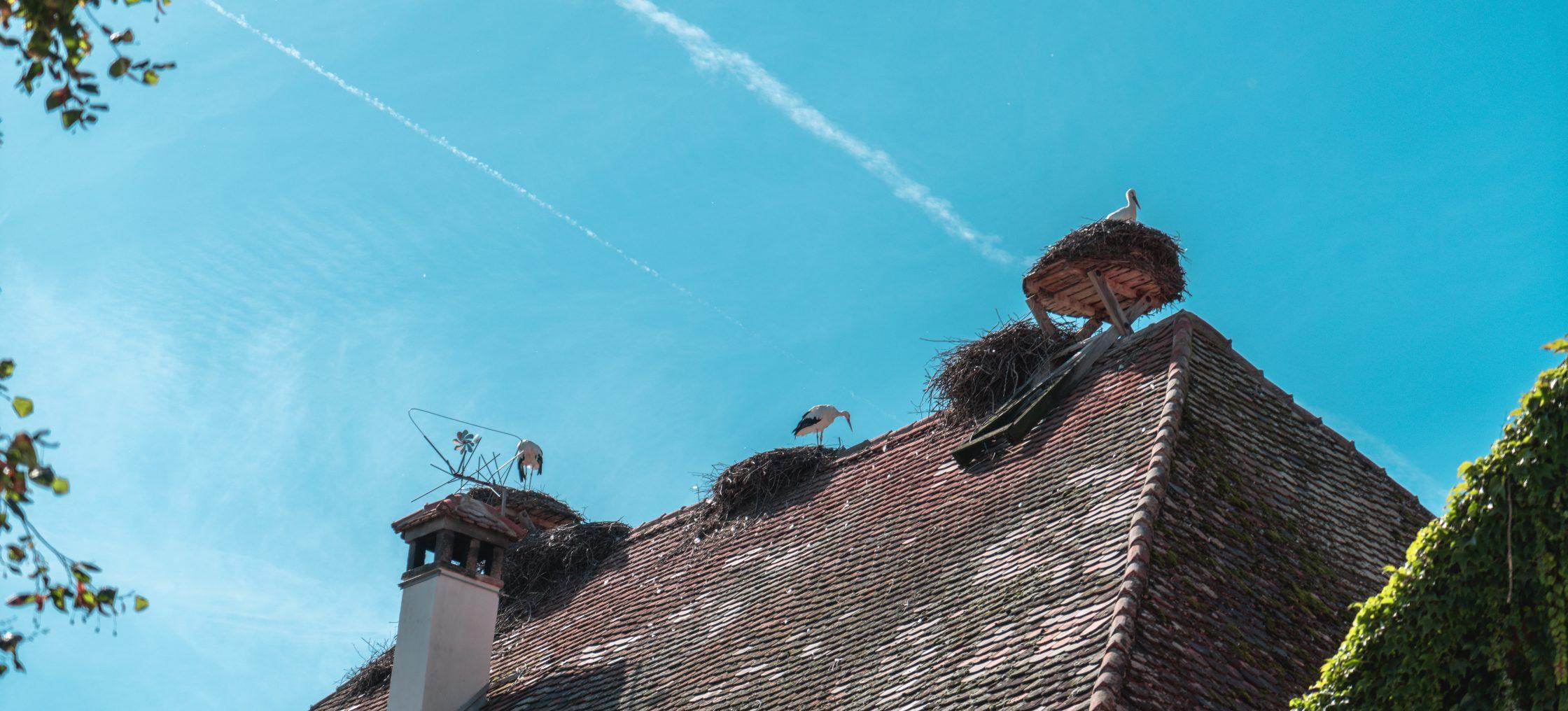 Bodensee Affenberg Storchnest