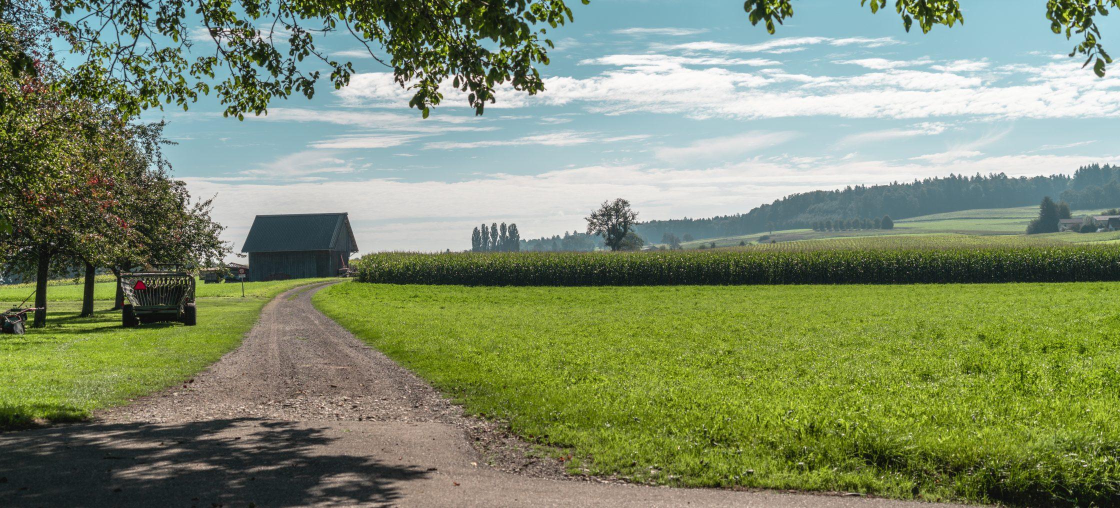 Bodensee Zelglihof Feld
