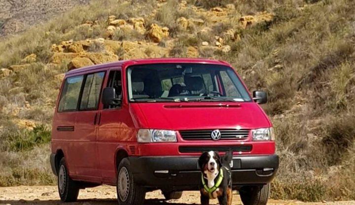 camping hund campingbus