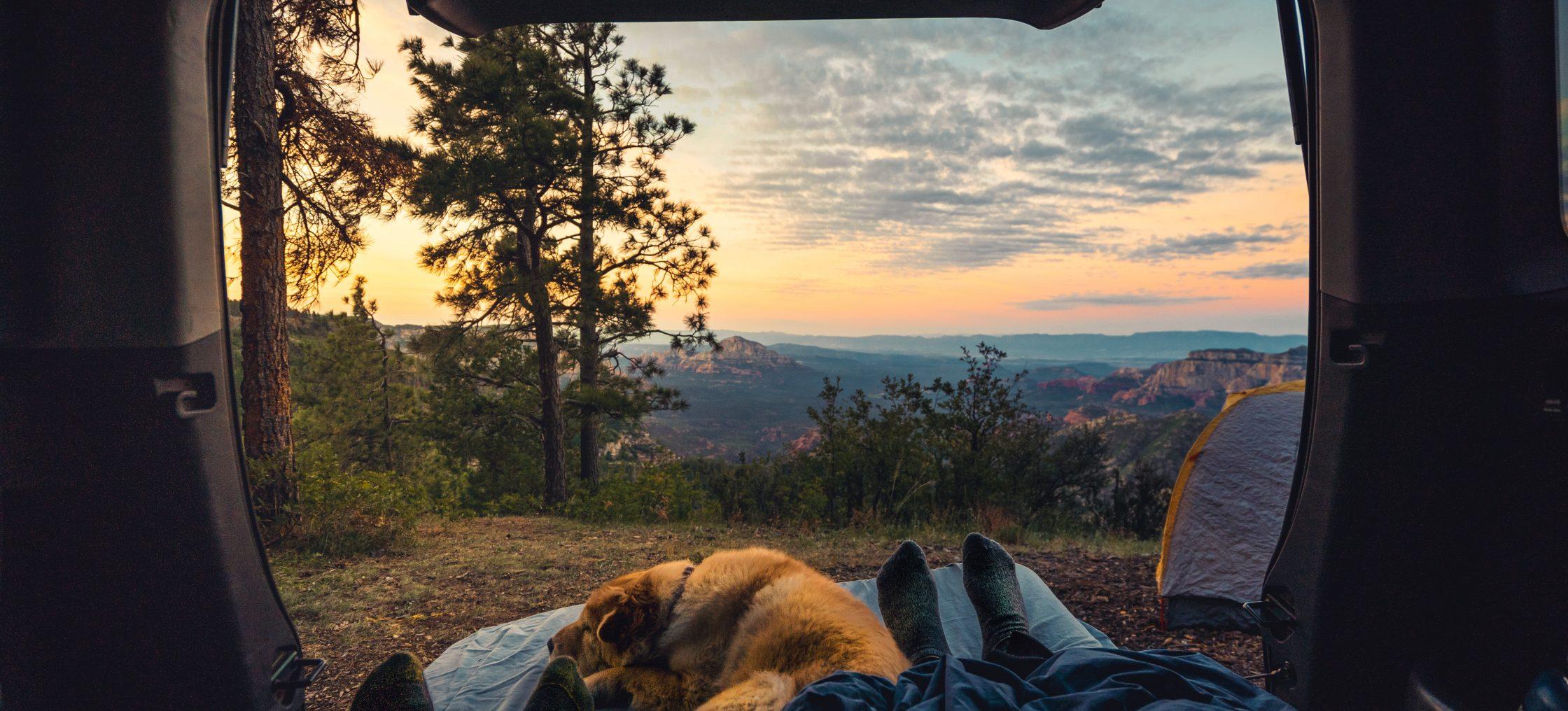 hund camping verhalten camper scaled