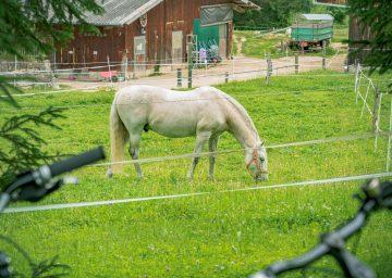 Grasendes Pferd auf der eingezäunten Wiese im Schweizer Jura