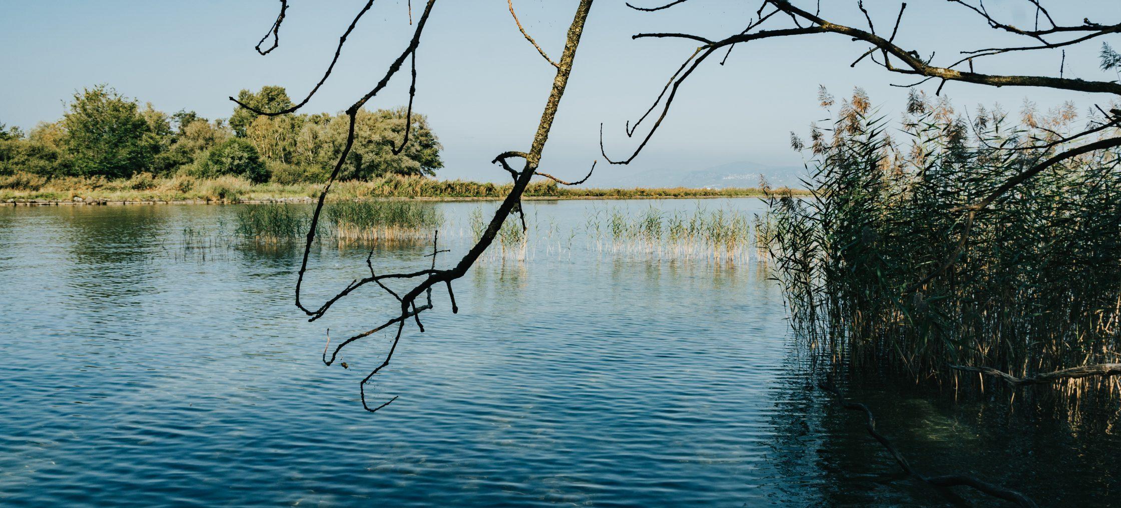 spatzieren naturschutzgebiet les grangettes scaled