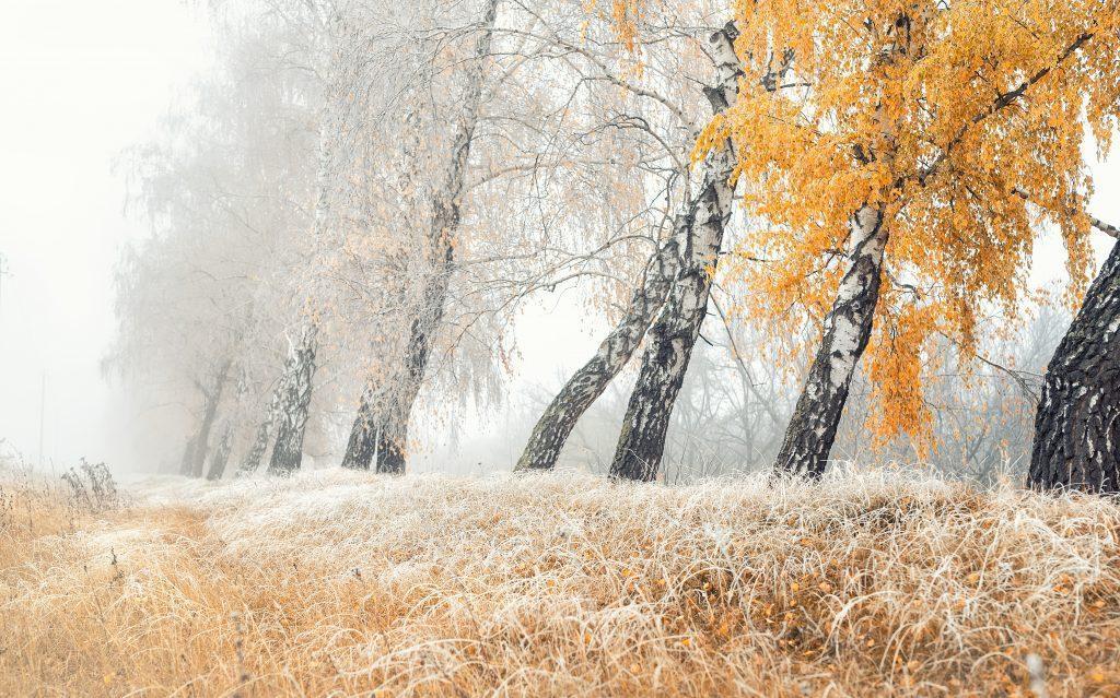 frost-ueber-landschaft