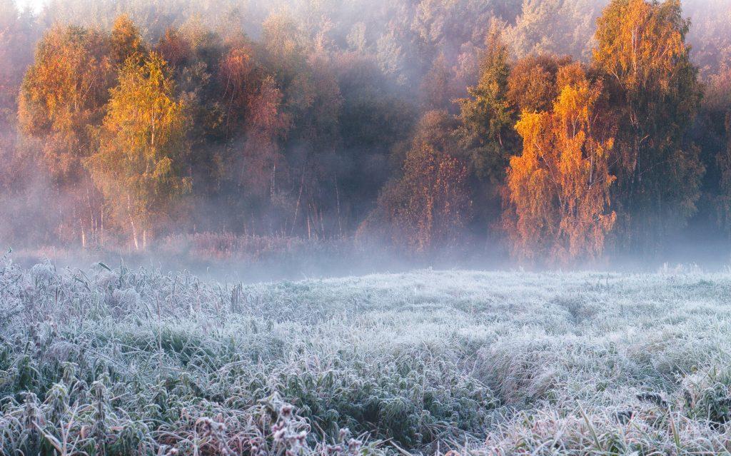morgentau-landschaft